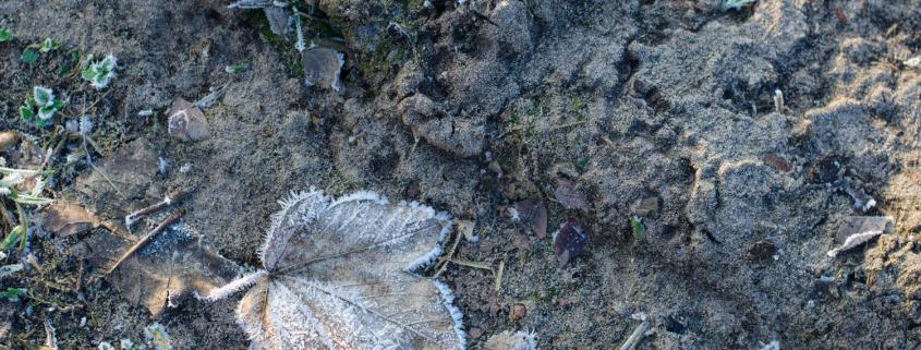 külmunud maapind